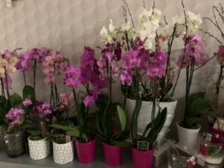 Flore et Sens