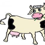 Le rêve des vaches