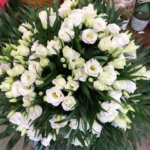 Aloes Fleurs