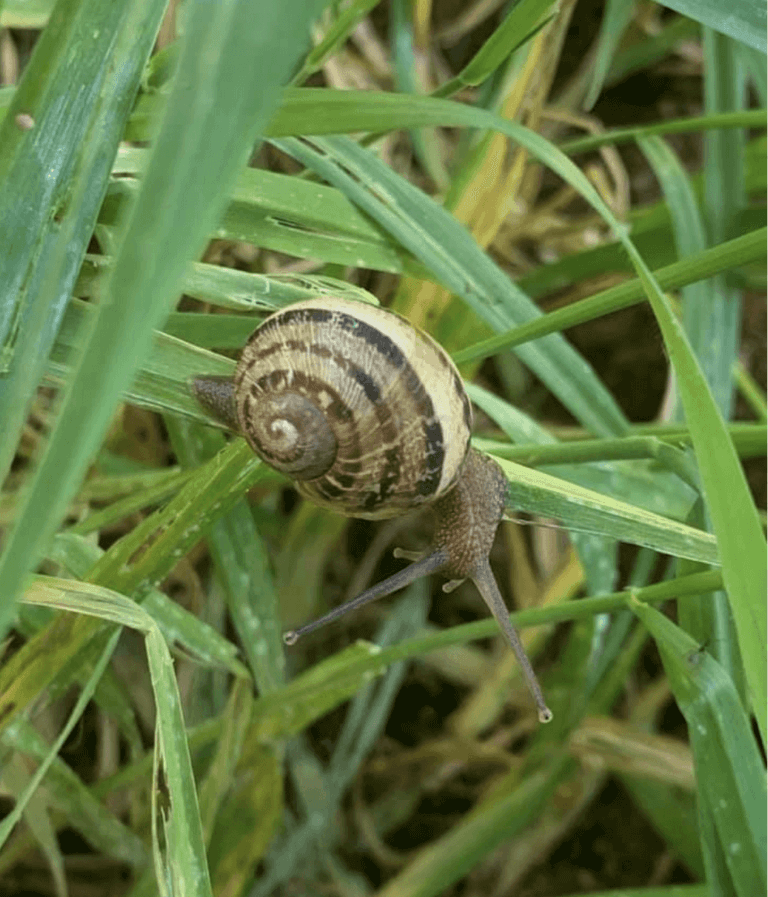 L'escargot de Mouliherne