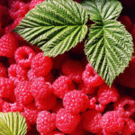 La Ferme des Petits fruits