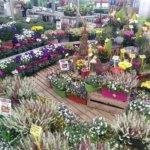 Jardin du Planty