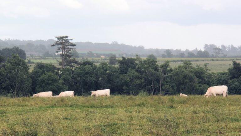La ferme bio de l'Anjubauderie