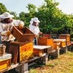 Aux miels d'Antan
