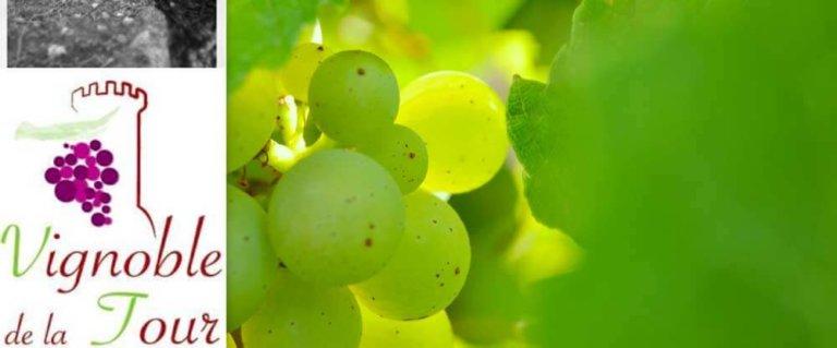 Vignoble de la Tour